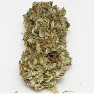 oklahoma marijuana aurora Cannabis cannabis seeds