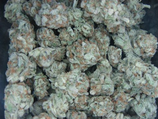 White-widow bugs Hybrid edibles marijuana medical marijuana florida recreational marijuana state