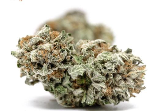 California Orange (AA) Sativa Marijuana online dispensary